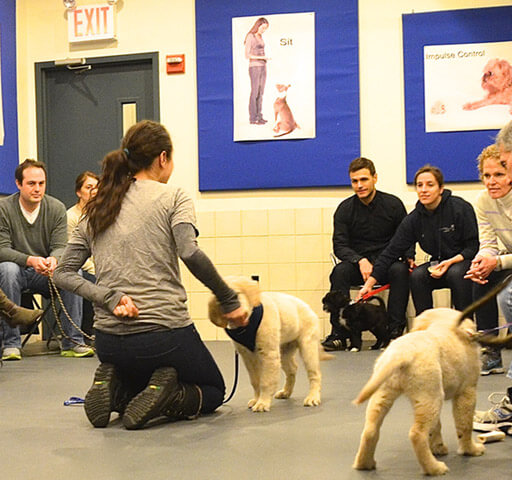 Puppy Class Part One