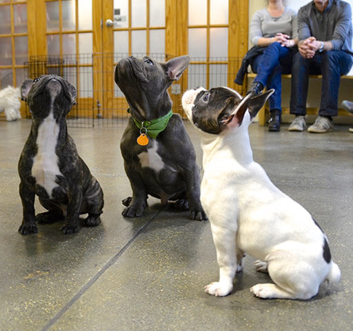 Puppy Class Part Two