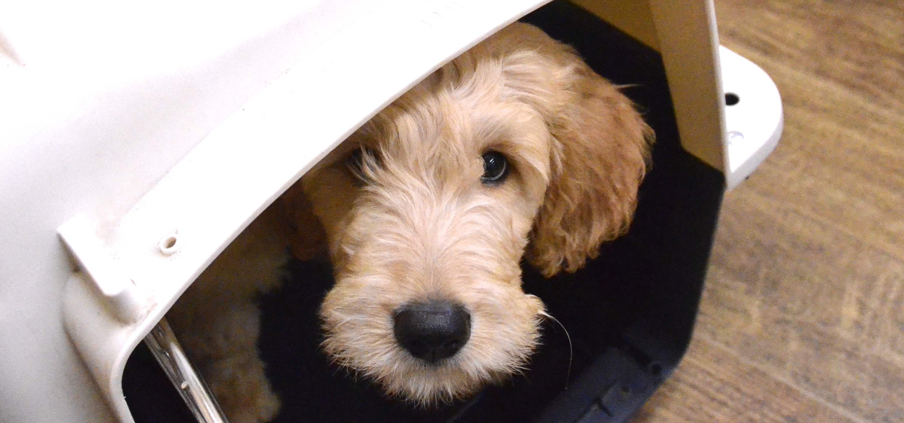 Choosing a Crate for Your Dog | Andrea Arden Dog Training