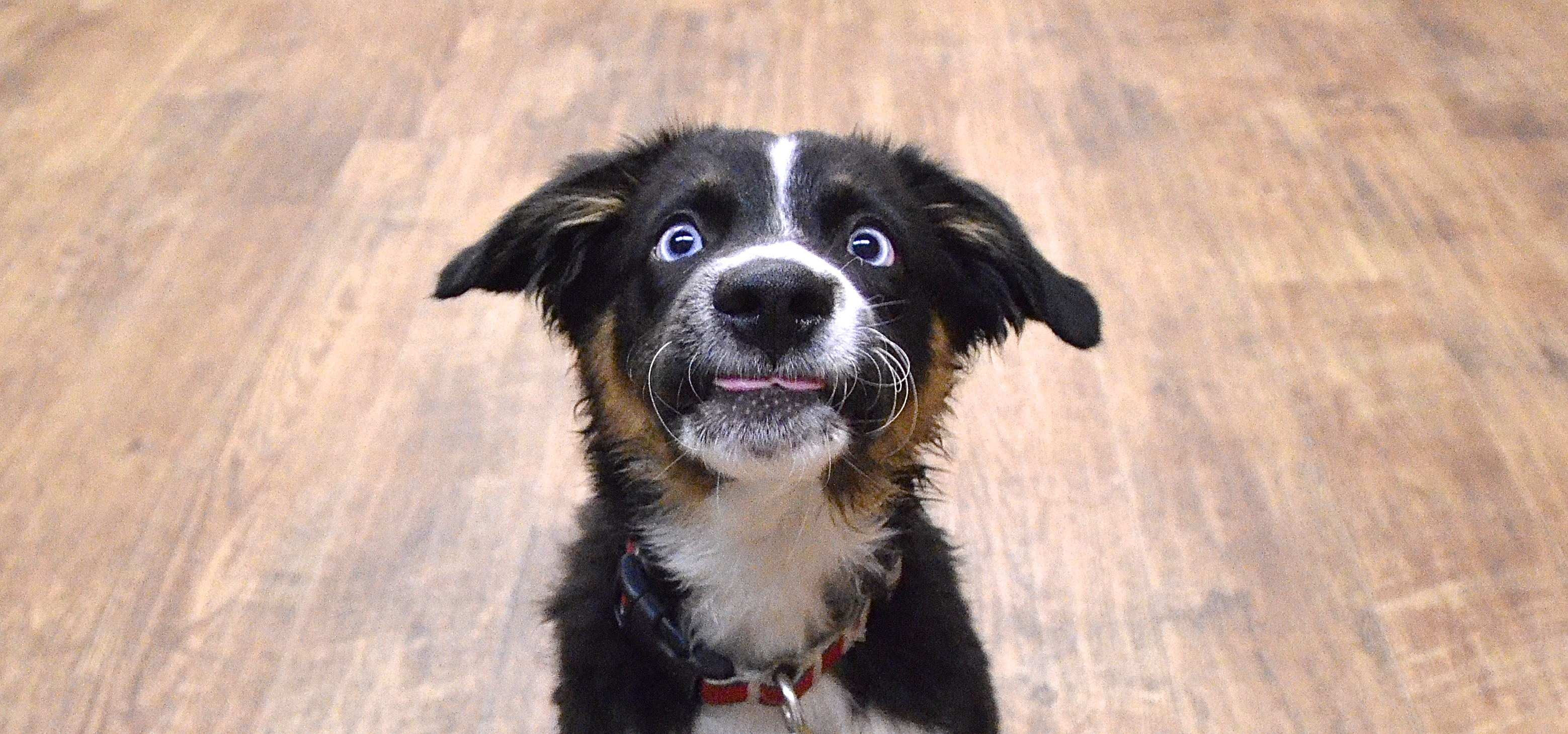Frenetic Random Activity Periods: Otherwise Known As Dog Zoomies! | Andrea  Arden Dog Training